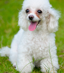 enzymes and probiotics for pets