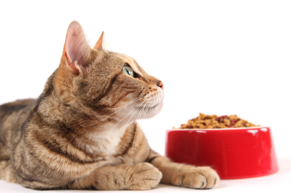 cat_and_bowl_iStock