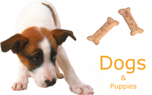 natural supplements for dogs